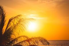 Palmera en la puesta del sol hermosa imagen de archivo