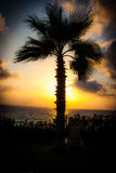 Palmera en la puesta del sol que pasa por alto el mar Imagenes de archivo