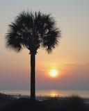 Palmera en la salida del sol Fotos de archivo libres de regalías