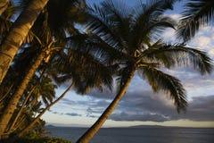 Palmera en Maui, Hawaii. fotos de archivo