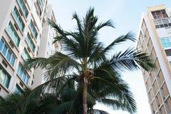 Palmera en Puerto Rico imagen de archivo