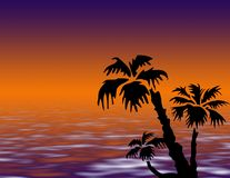 Palmera en puesta del sol Foto de archivo libre de regalías