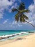 Palmera en un mar blanco de la playa y de la turquesa de la arena Fotografía de archivo libre de regalías