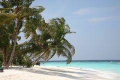 Palmera en una costa del océano Fotos de archivo libres de regalías