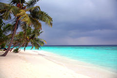 Palmera en una costa del océano Fotografía de archivo libre de regalías