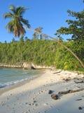 Palmera en una playa tropical Fotos de archivo