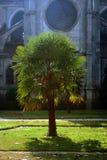Palmera en yarda de la iglesia Imagenes de archivo
