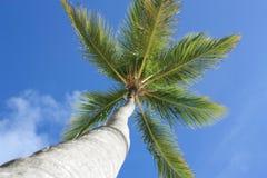 Palmera exótica en la playa Imagen de archivo libre de regalías