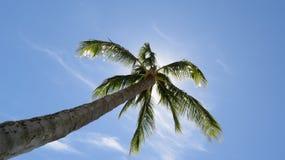 Palmera hawaiana y Sun que brillan Imágenes de archivo libres de regalías