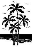 Palmera negra de la silueta    Imagen de archivo libre de regalías