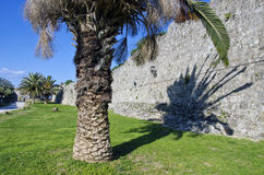 Palmera por la pared vieja en Rodas Imagenes de archivo