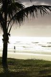 Palmera por la playa Fotografía de archivo