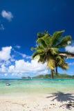 Palmera que cuelga sobre la playa Imágenes de archivo libres de regalías