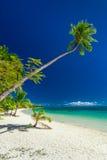 Palmera que cuelga sobre la playa en las Islas Fiji de Mamanuca Imagen de archivo