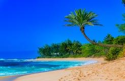 Palmera que cuelga sobre una playa tropical de la laguna Fotos de archivo