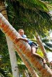 Palmera que sube del muchacho local en el pueblo de Lavena, isla de Taveuni, Foto de archivo libre de regalías