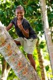 Palmera que sube del muchacho local en el pueblo de Lavena, isla de Taveuni, Fotos de archivo libres de regalías
