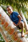 Palmera que sube del muchacho local en el pueblo de Lavena, isla de Taveuni, Fotos de archivo