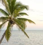 Palmera sobre el océano fotos de archivo