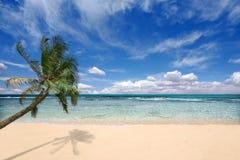 Palmera sobre las ondas de océano Fotografía de archivo libre de regalías