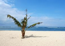 Palmera sola del bebé en una playa Imagen de archivo