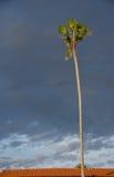 Palmera sola destacada por puesta del sol imagen de archivo