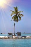 Palmera sola en la isla minúscula en el mar maldives foto de archivo