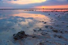 Palmera tropical con puesta del sol Imagen de archivo libre de regalías