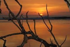 Palmera tropical con puesta del sol imagenes de archivo