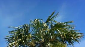 Palmera tropical en fuertes vientos almacen de metraje de vídeo