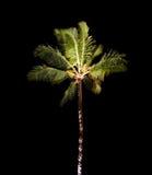 Palmera tropical en la noche Fotos de archivo libres de regalías