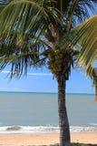 Palmera tropical en la playa Imágenes de archivo libres de regalías