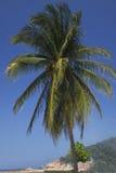 Palmera tropical hermosa fotos de archivo libres de regalías