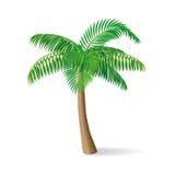 Palmera tropical Ilustración del vector Fotos de archivo