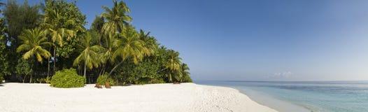 Palmera tropical y arena blanca Maldives Imagen de archivo libre de regalías