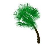 Palmera verde en ángulo en el ejemplo blanco del fondo Foto de archivo libre de regalías