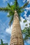 Palmera verde en el cielo azul con las nubes blancas Foto de Playa Imagenes de archivo