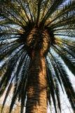 Palmera verde hermosa en el parque público, Valencia, España Imagenes de archivo