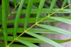 Palmera verde izquierda Imagen de archivo libre de regalías