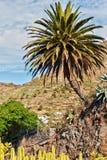 Palmera y cactos. Imagen de archivo libre de regalías