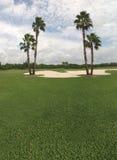Palmera y campo de golf imagen de archivo