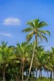 Palmera y cielo azul imagenes de archivo