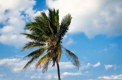 Palmera y cielo azul Foto de archivo libre de regalías