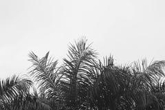 Palmera y cielo de Sihouette fotos de archivo