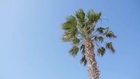 Palmera y el cielo azul en la tierra trasera en un día soleado ventoso metrajes