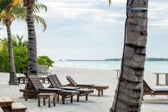 Palmera y malos del san en la playa Imágenes de archivo libres de regalías