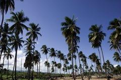 Palmera y playa Imágenes de archivo libres de regalías