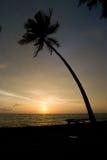 Palmera y puesta del sol Imágenes de archivo libres de regalías