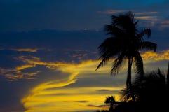 Palmera y puesta del sol Fotografía de archivo libre de regalías