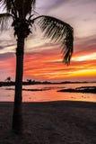 Palmera y puesta del sol colorida Imágenes de archivo libres de regalías